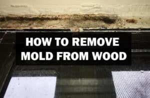 remove_mold_from_wood