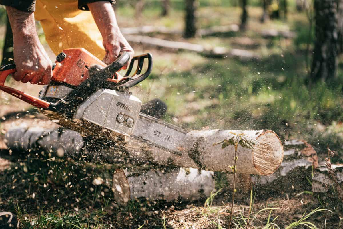 person-holding-chainsaw-4206112